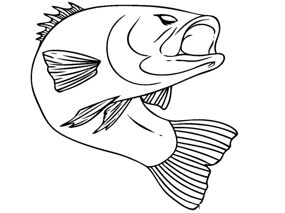 fish color page bass fish
