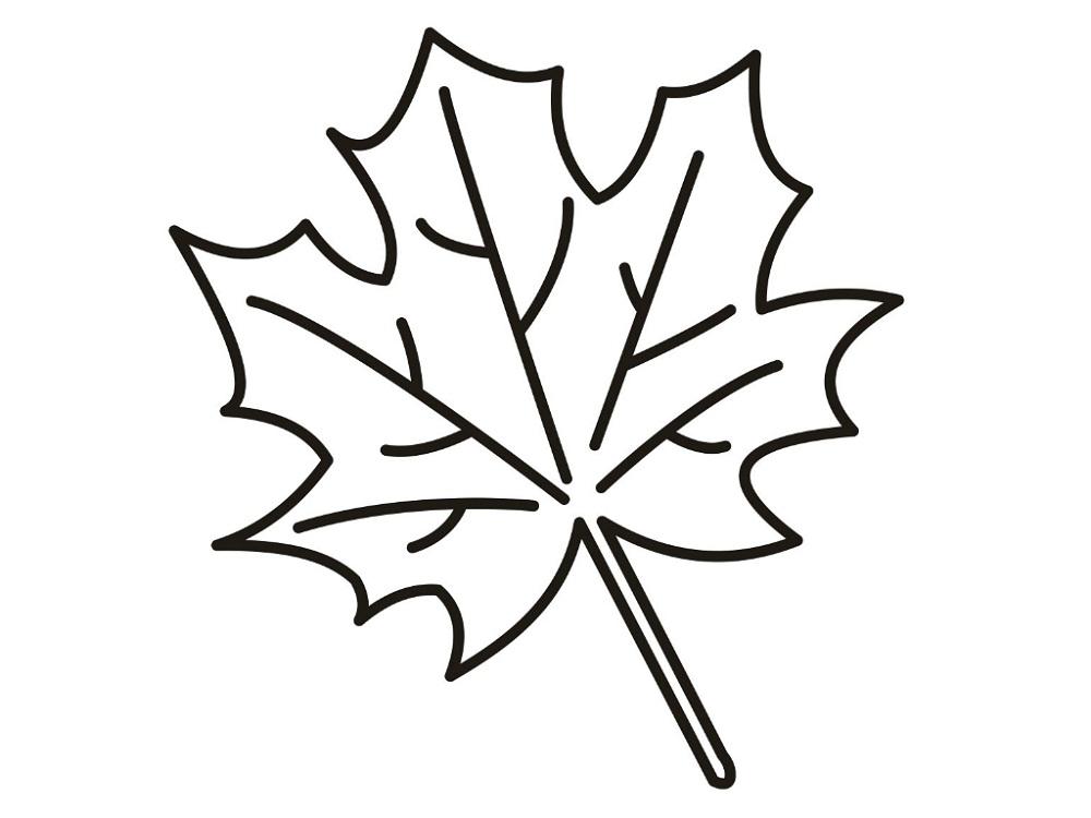 leaf coloring 2016