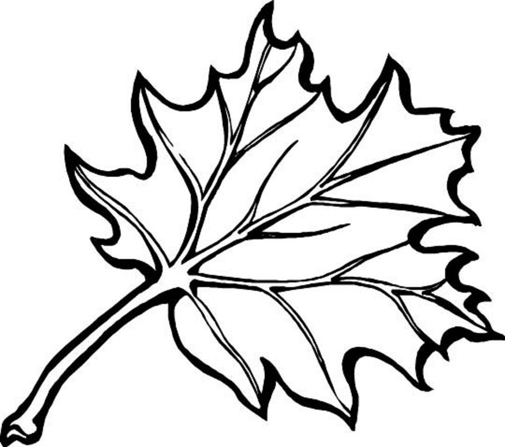 leaf coloring autumn