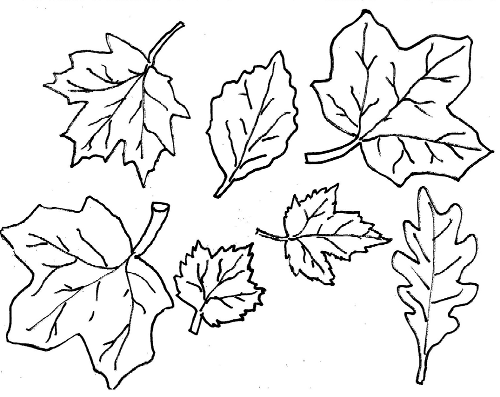 leaf coloring maple