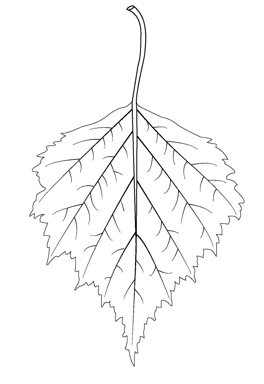 leaf coloring standart