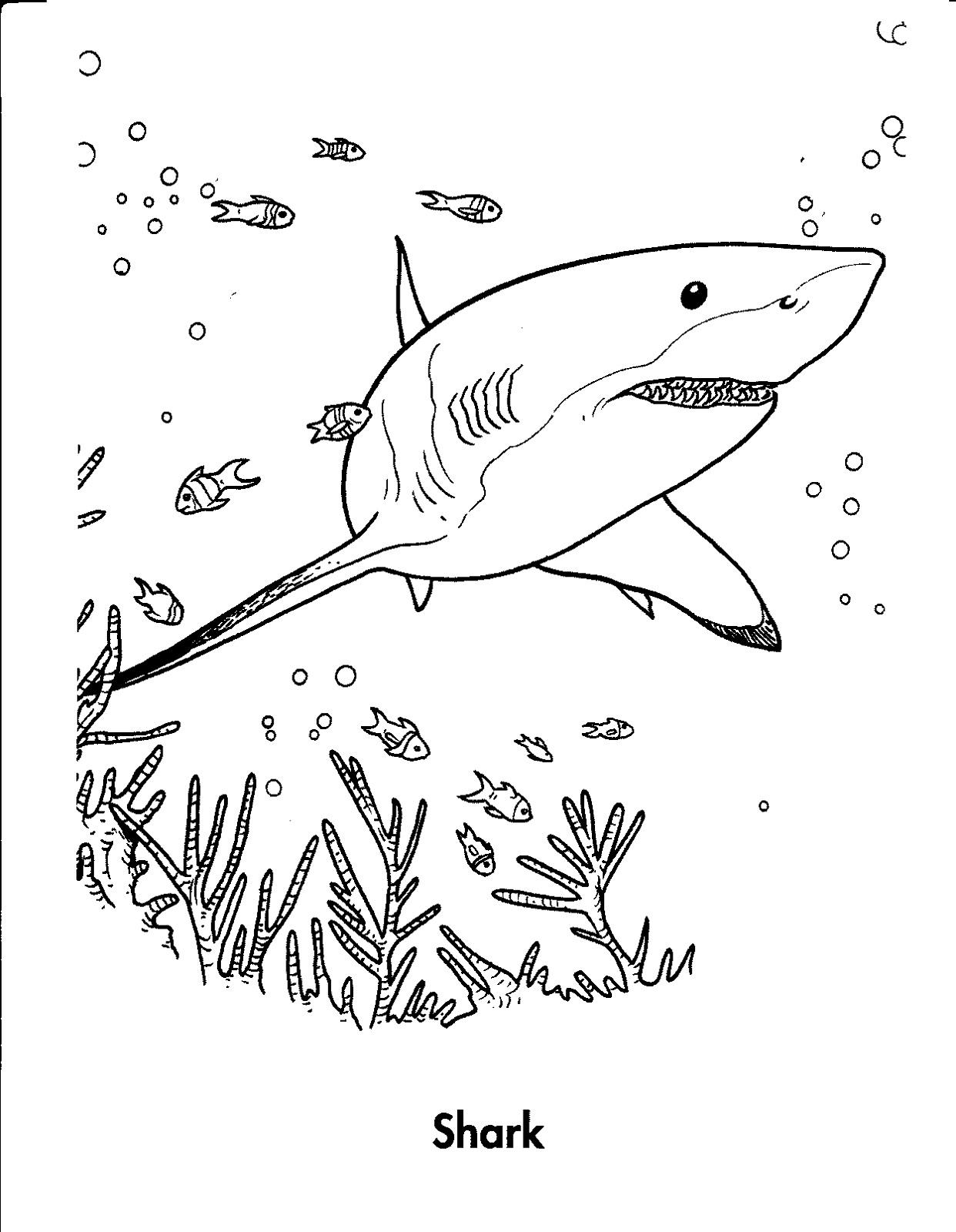 Shark Sheets for Kids  Activity Shelter