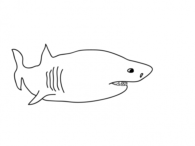 shark sheets for kids cartoon
