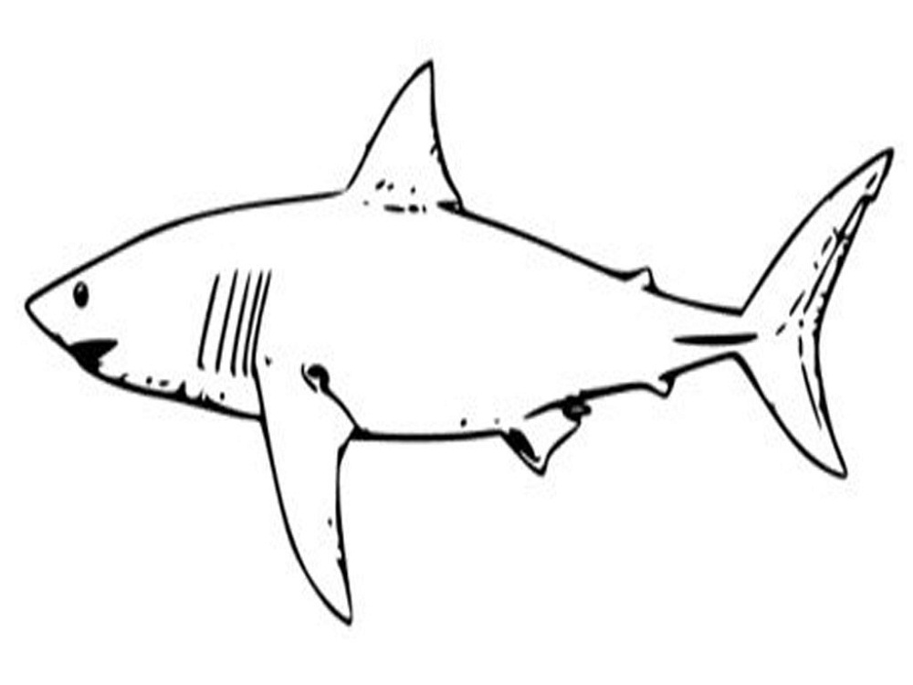 shark sheets for kids for coloring