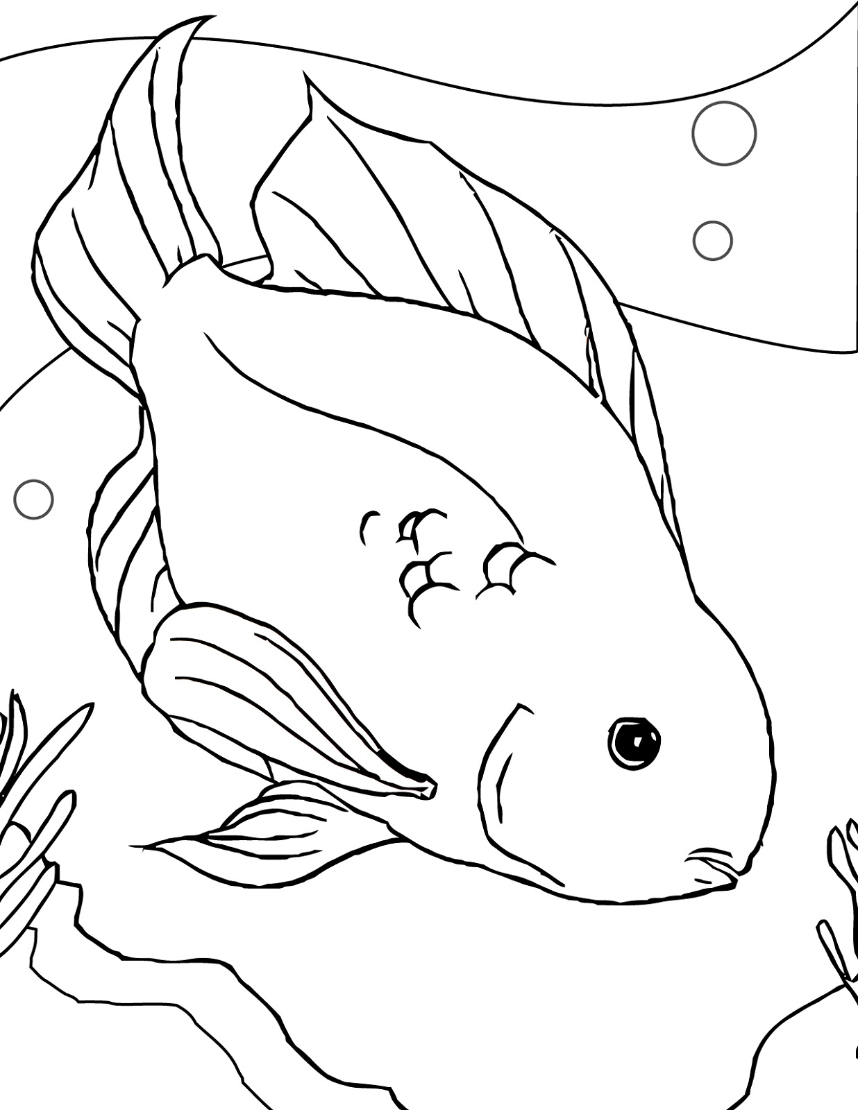 Fish Color Sheet Best