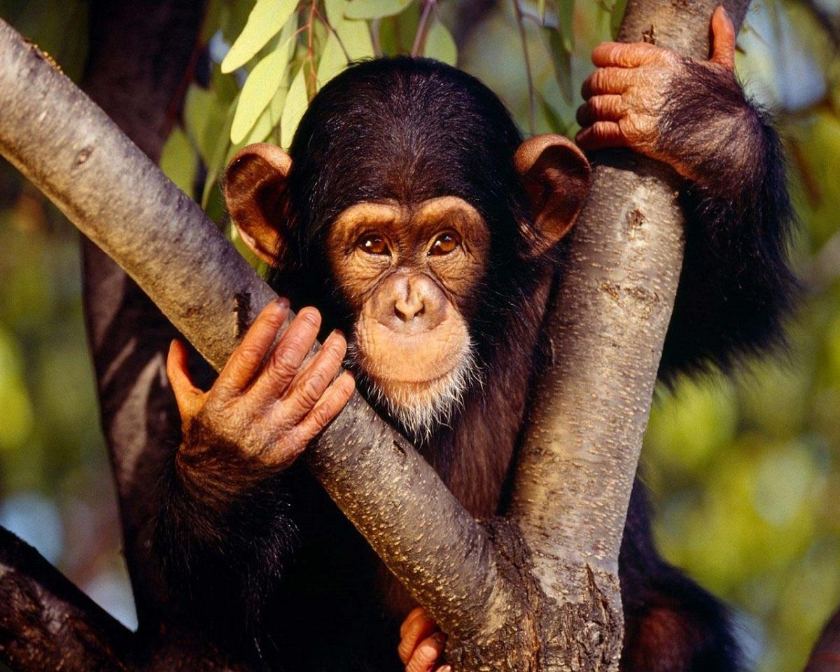images of monkeys cute