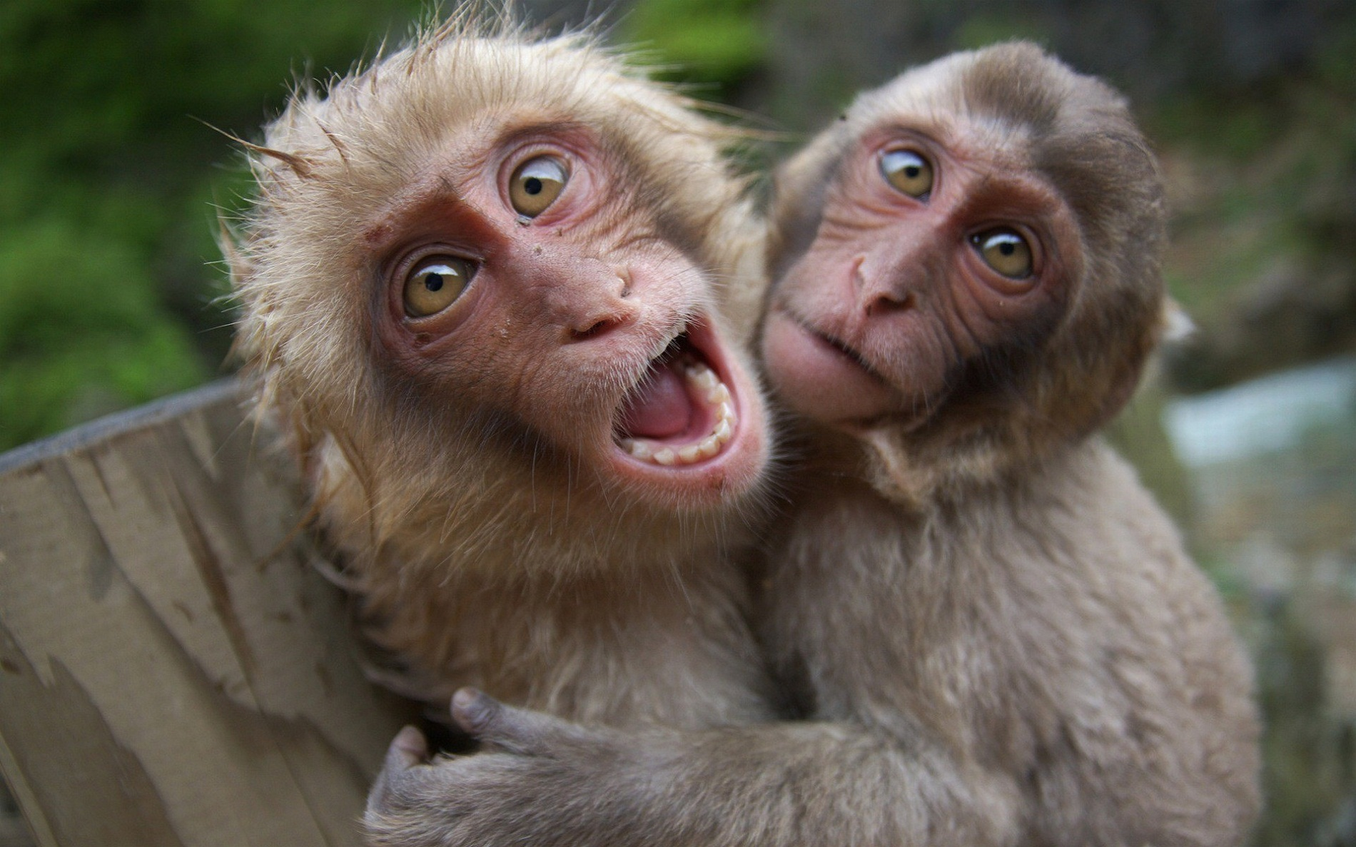 images of monkeys funny