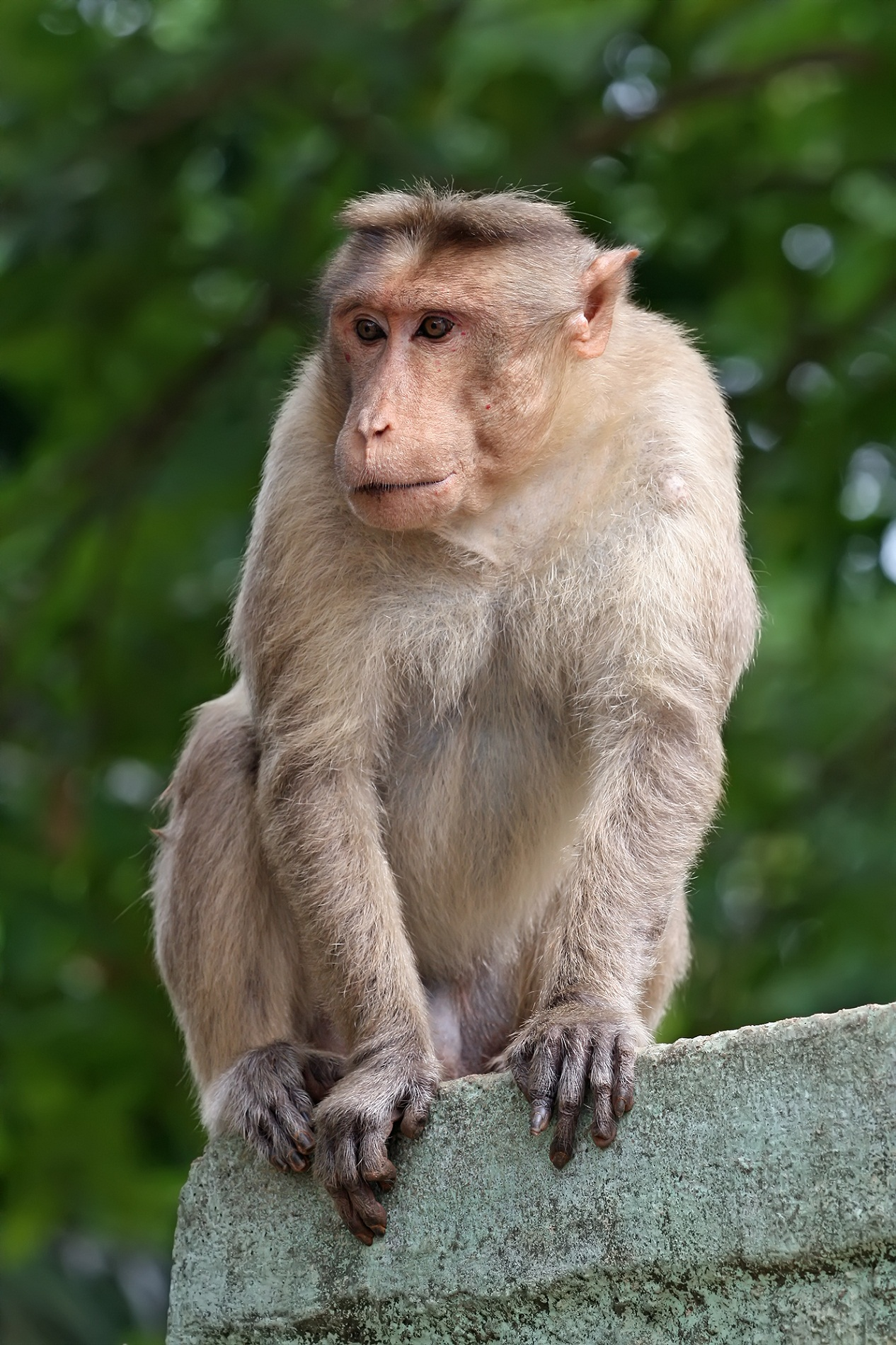 images of monkeys new