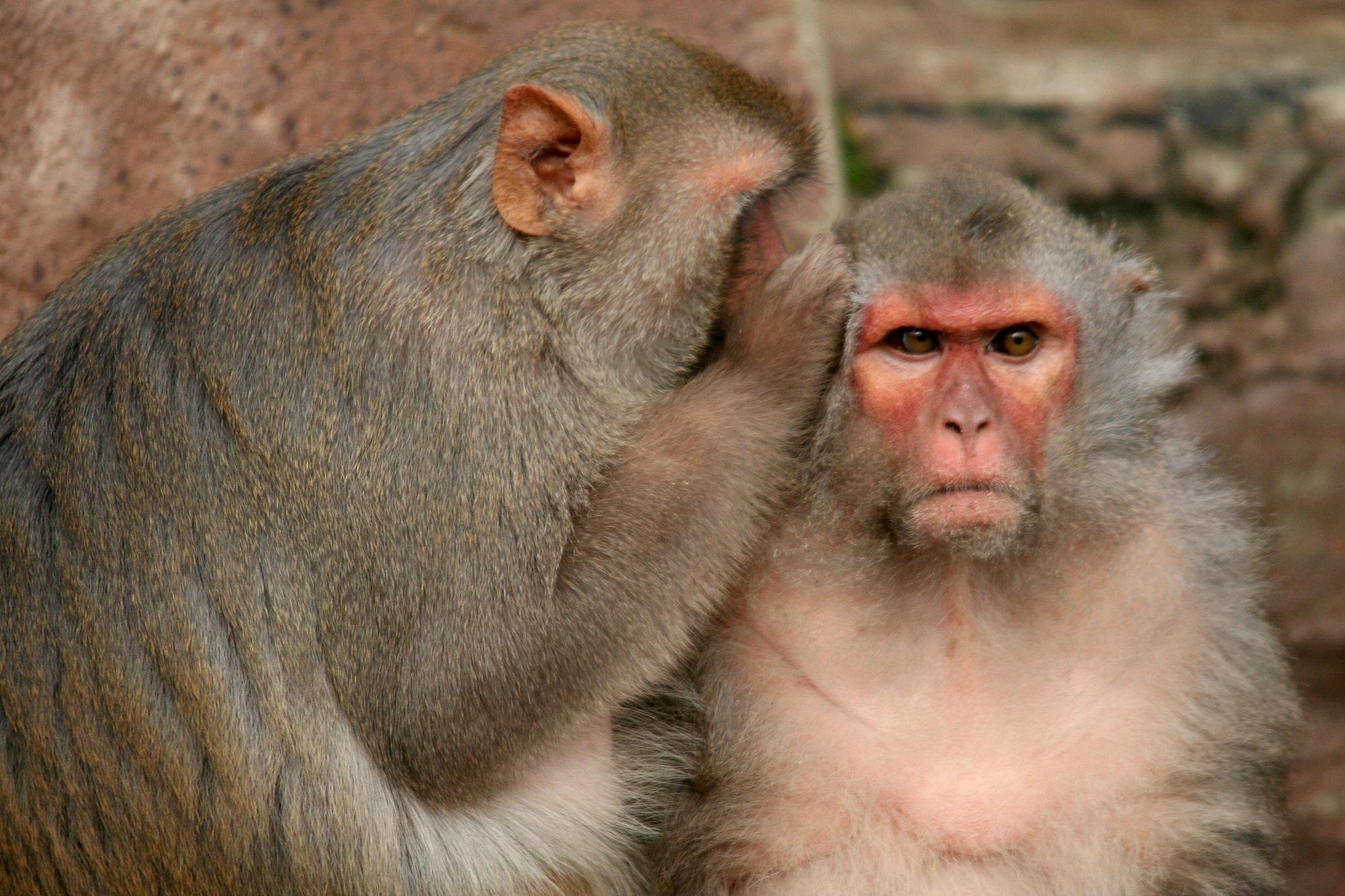 images of monkeys nice