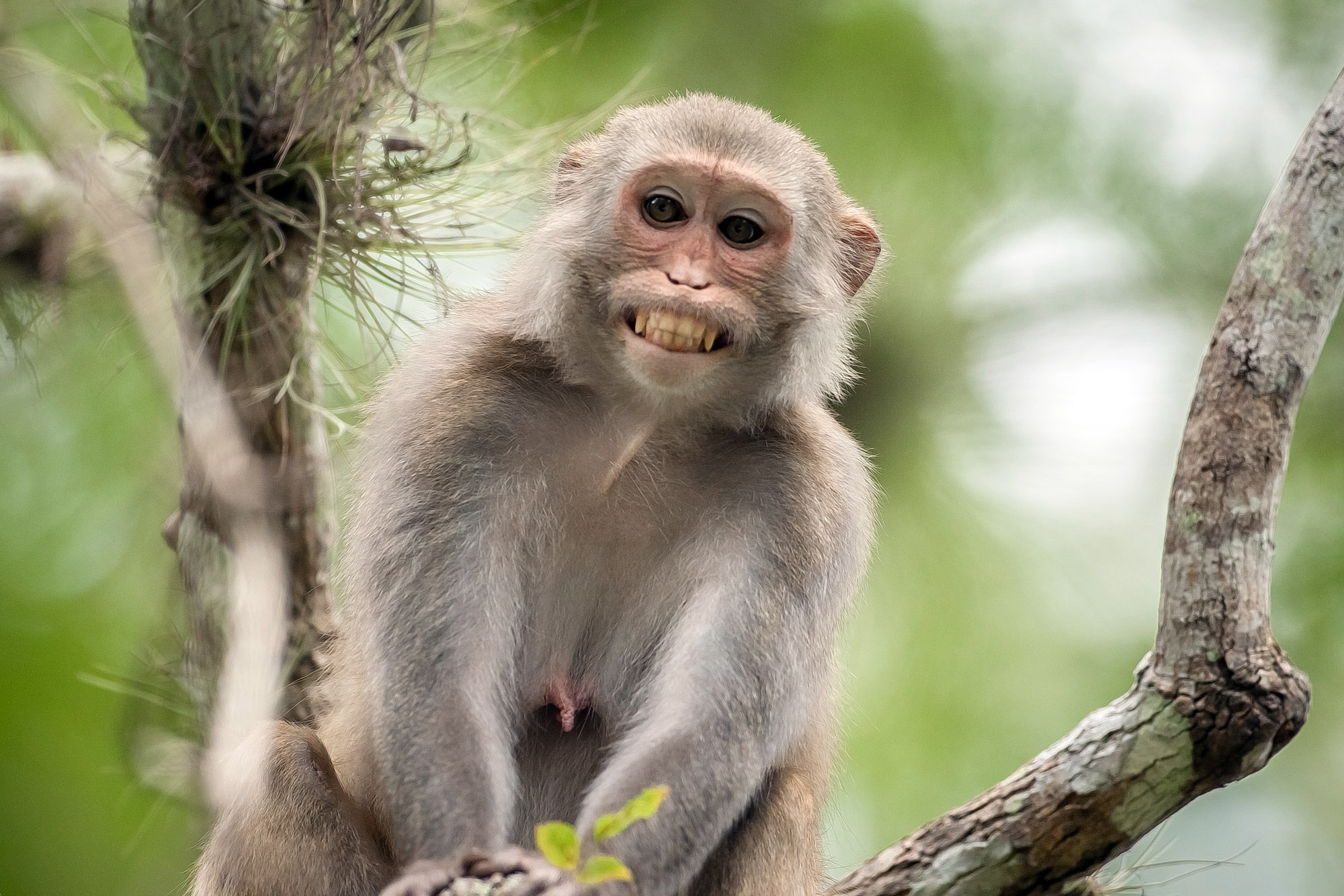 images of monkeys smile