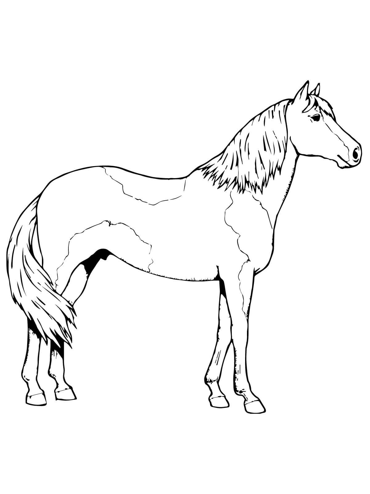 horse color sheet new