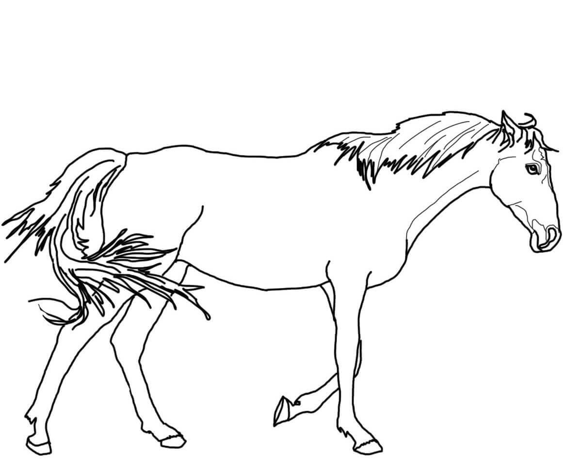 horse color sheet simple