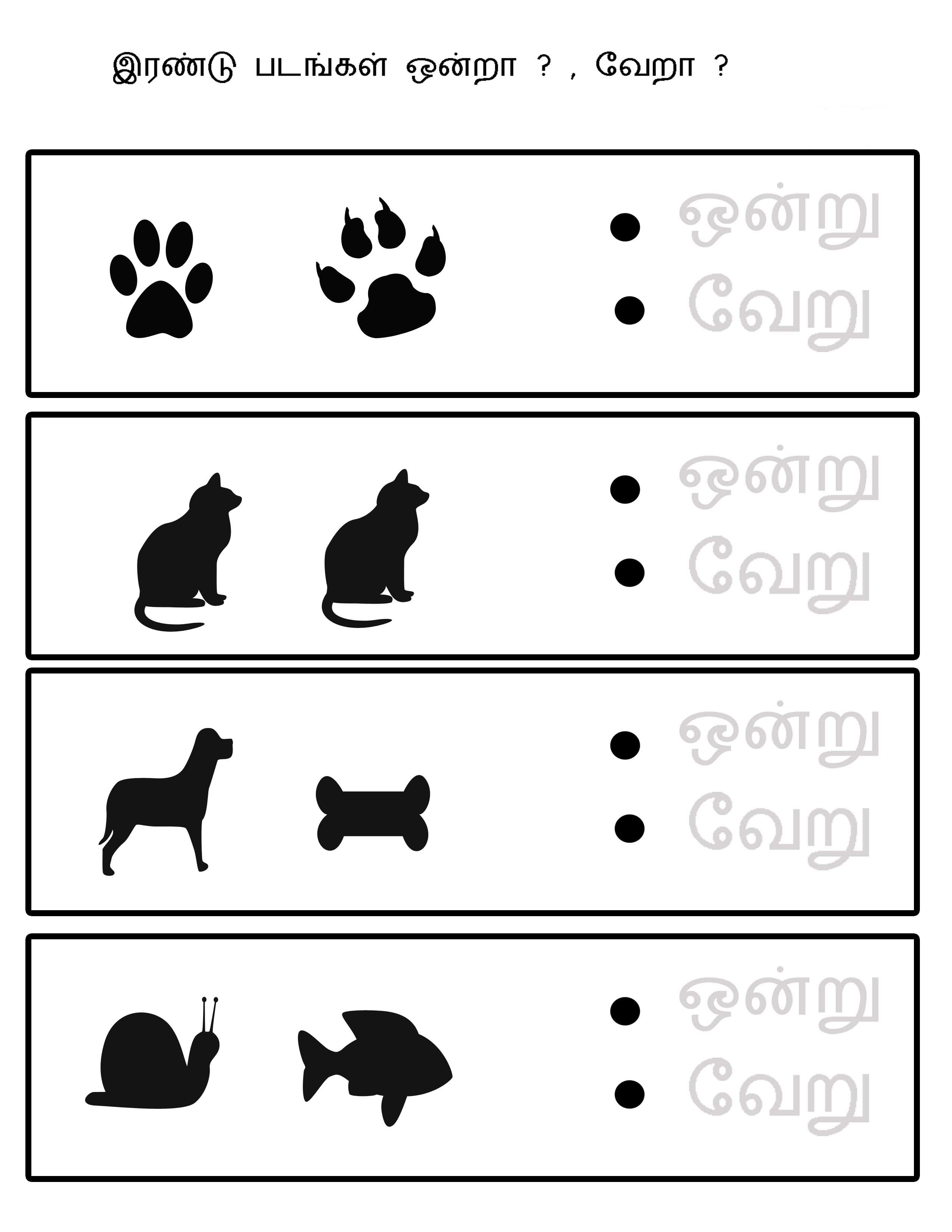 same different worksheets animals