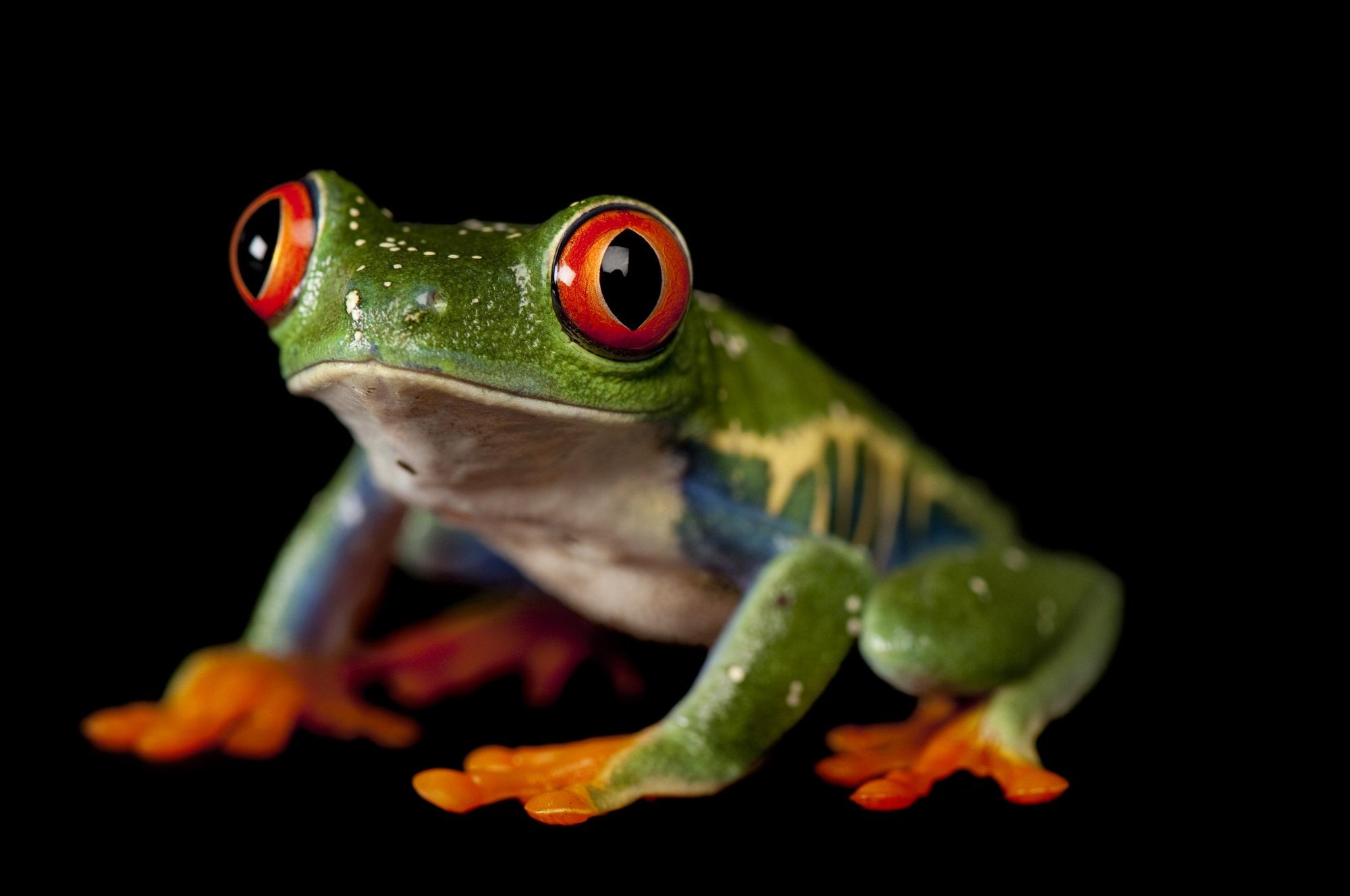 amphibians-2016
