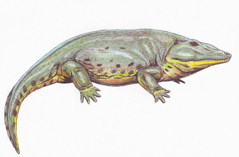 amphibians-big