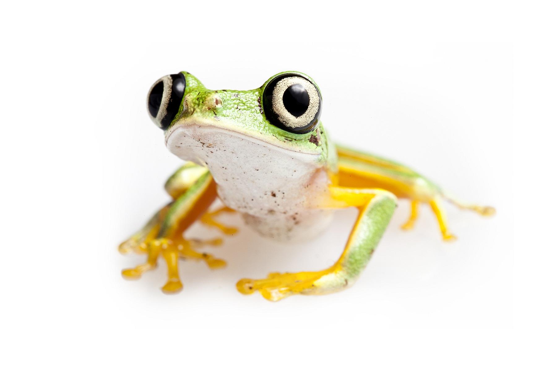 amphibians-funny