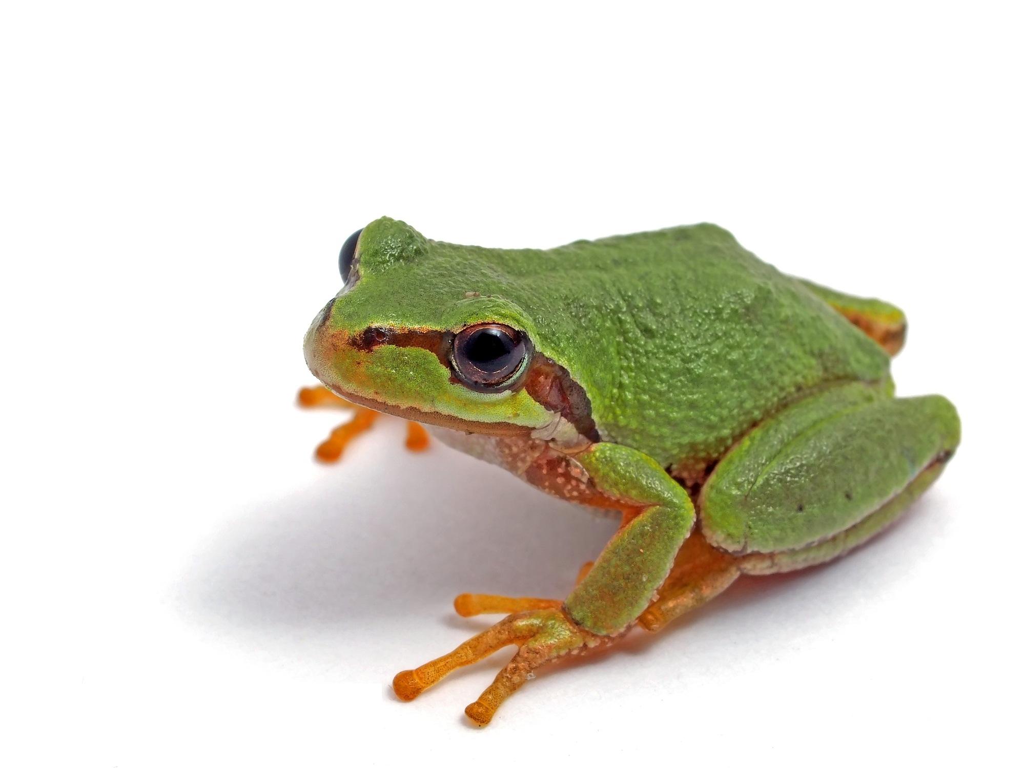 amphibians-nice