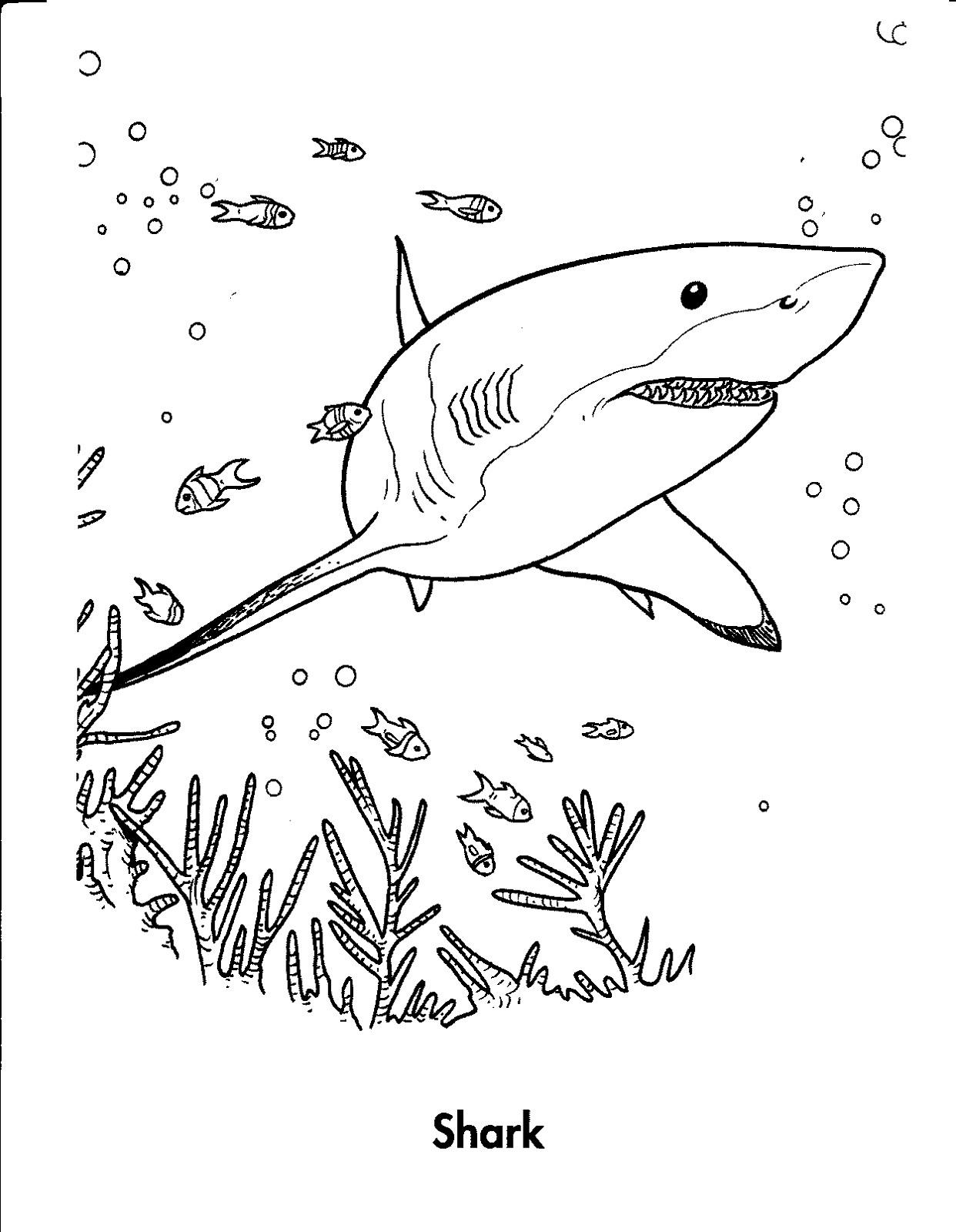 shark-color-page-nice