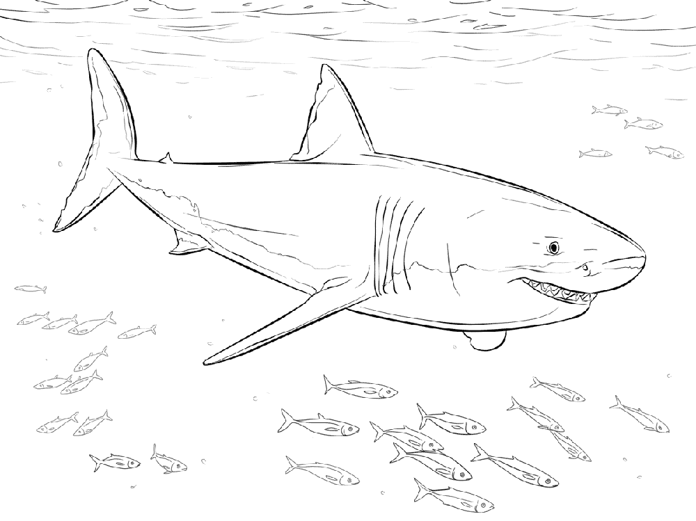 shark-color-pages-printable