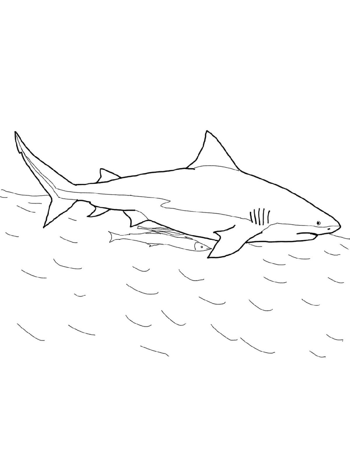 shark-color-pages-simple