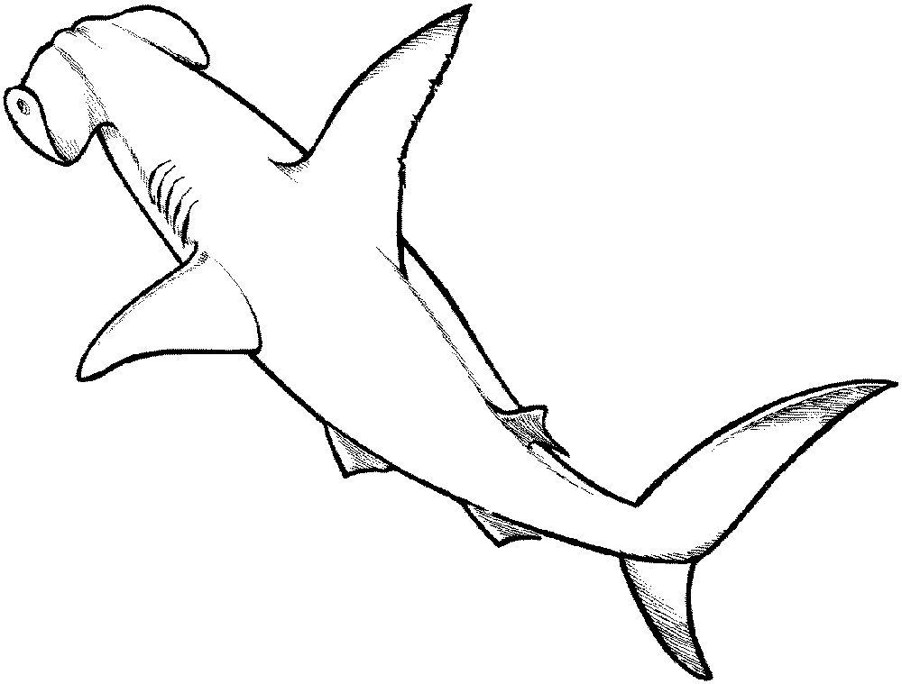 shark-color-pages-wild