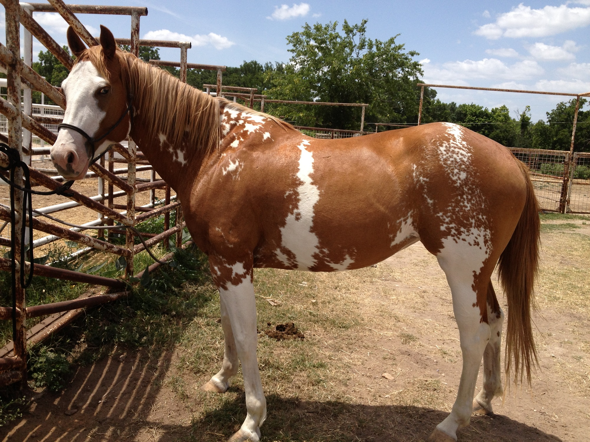 pictures-of-horse-for-kids-brown