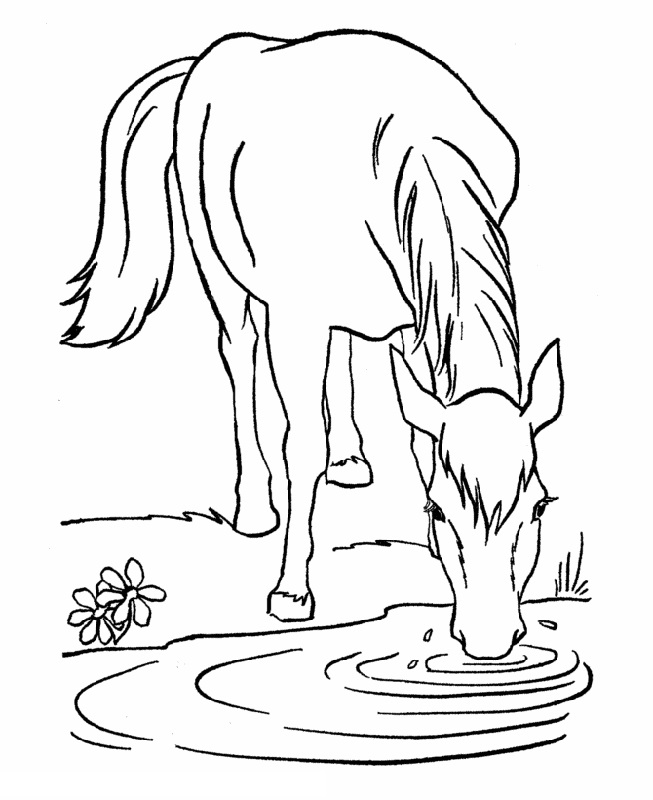 horse-color-pictures-printable