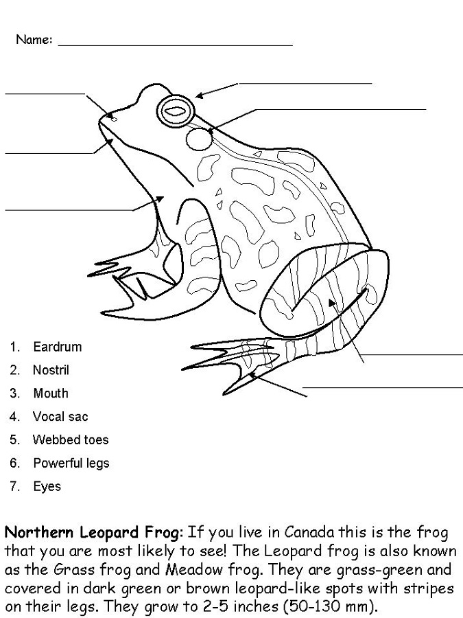 Frog Activities For Kids