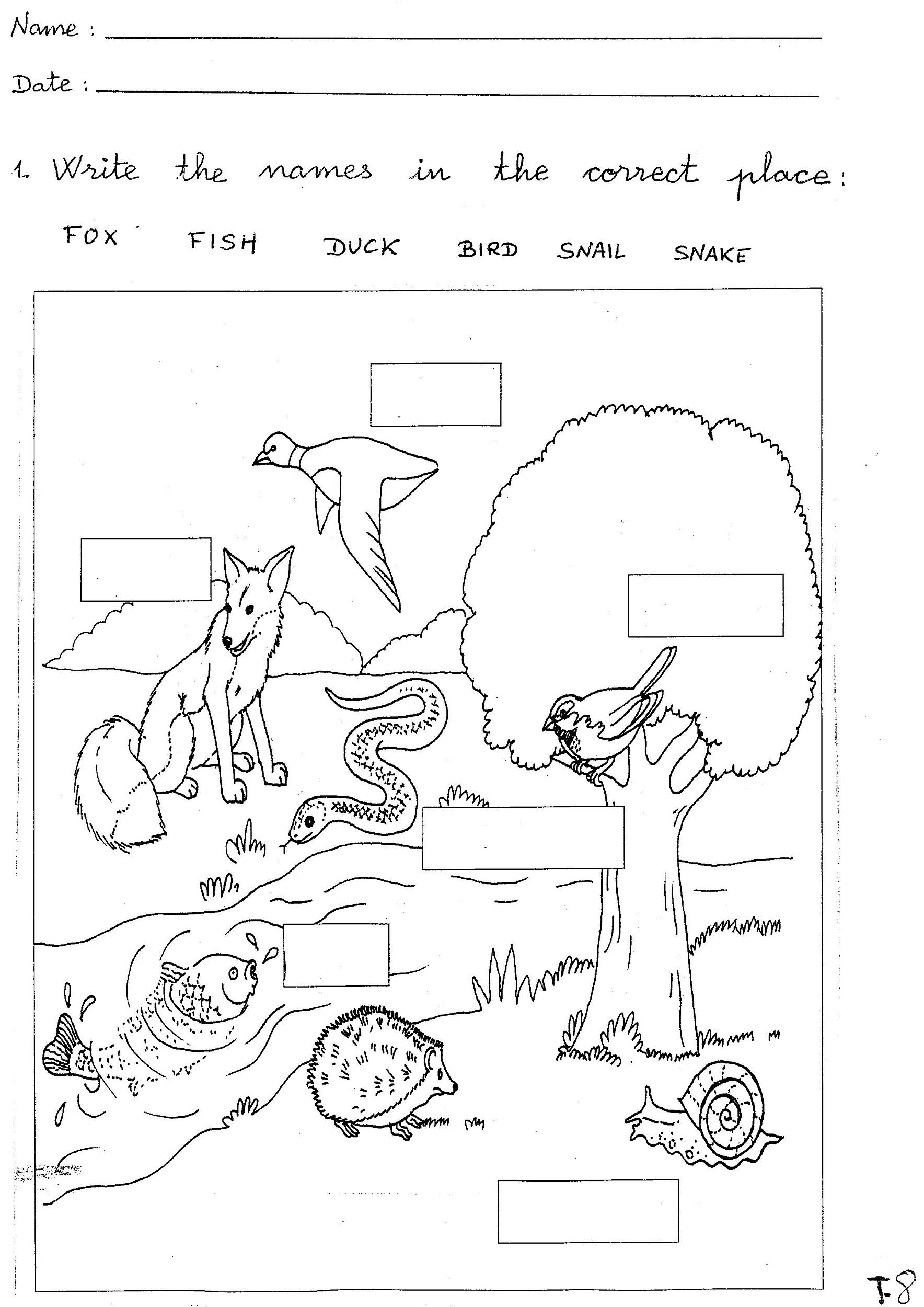 free science worksheets animal