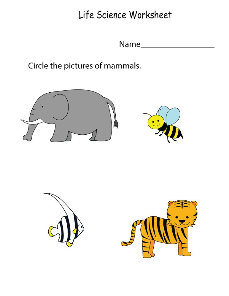 free science worksheets preschool